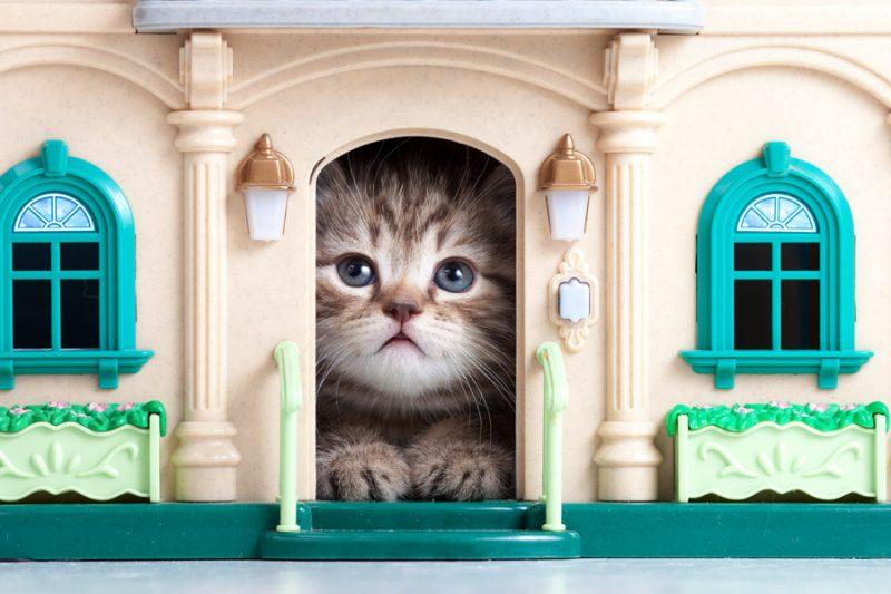Общественная палата предлагает делать дома для кошек